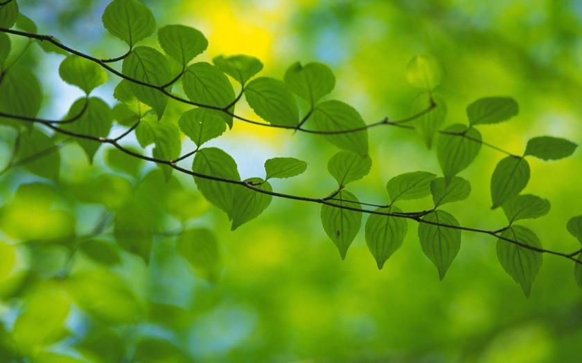 hojas-verdes-wallpapers_34196_2560x1600